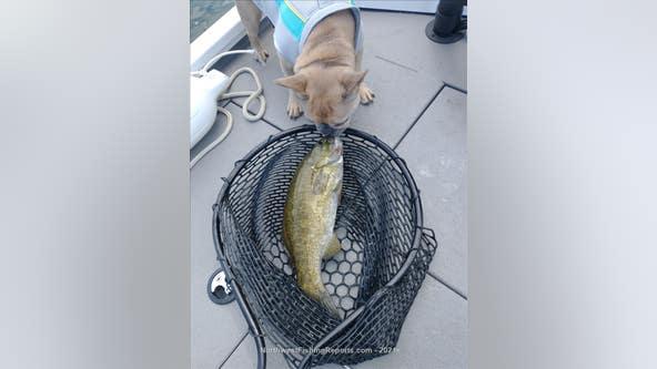 Fishing report of the week: Smallmouth Bass at Sammamish Lake