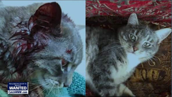 $2,000 reward offered after beloved family cat shot in the head