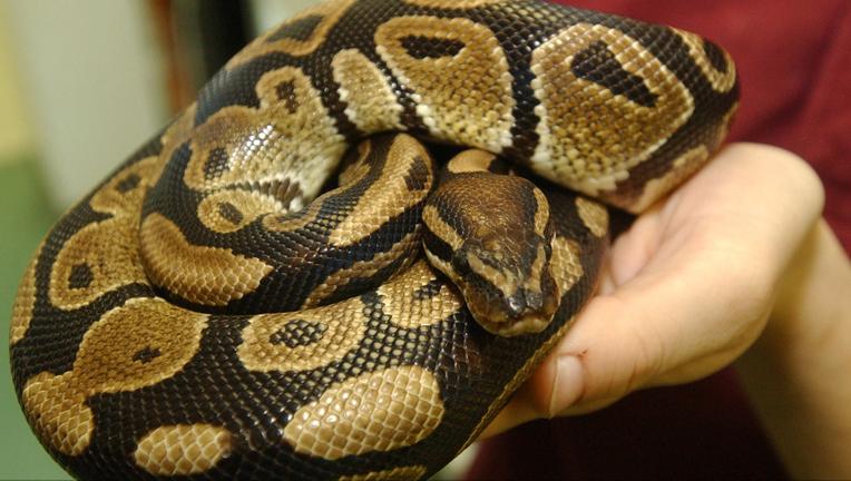 a9b4317c-python_1464283296082-408795.png