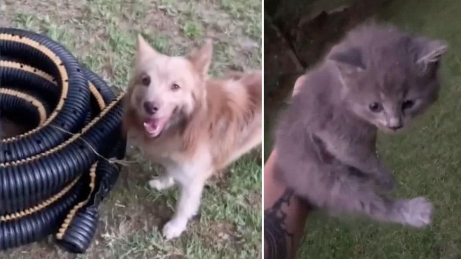 dog kitten hose rescue storyful split