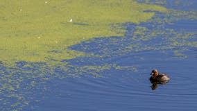 Pass Lake in Skagit County closes due to toxic blue-green algae