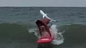 VIDEO: Shark leaps out of ocean behind unsuspecting surfer