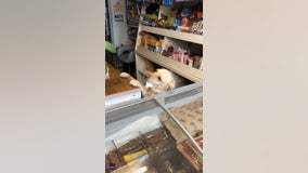Adorable canine clerk mans convenience store in Ireland
