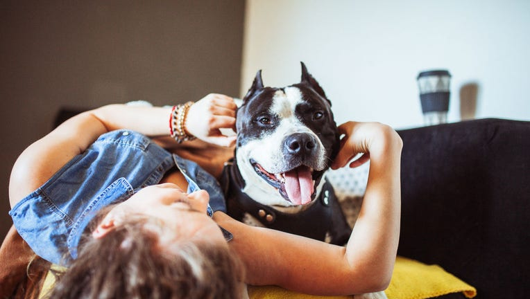 Credible-Homeonwers-insurance-can-be-more-expensive-with-pets-iStock-1221202578.jpg