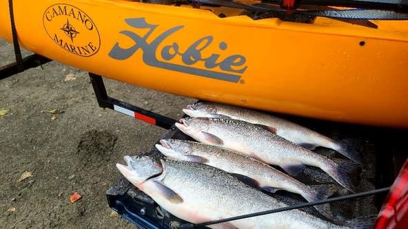 Fishing Report of the Week: Pink Salmon in Skagit River