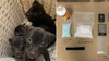 Police seize drugs, puppies at Seattle motel