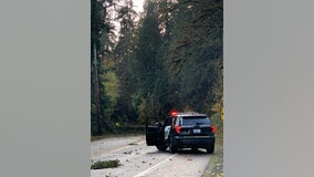 'My heart goes out to the families,' 2 killed by falling tree near Preston