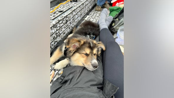 Lacey Police need help finding truck, boat and puppy named 'Bear' stolen from parking lot
