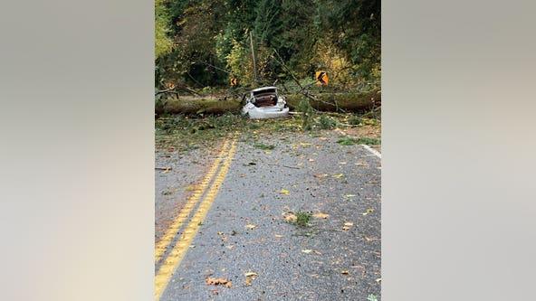 2 killed by falling tree near Preston