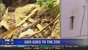 Good Day Orlando visits the zoo