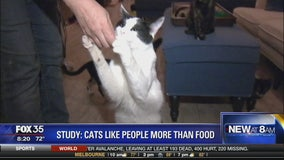 Study: cats like people more than food