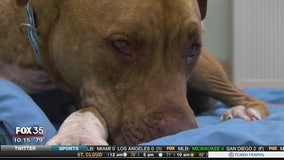 Dumped dogs rescued after 3-day search