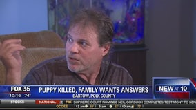 Puppy killed and family wants answers
