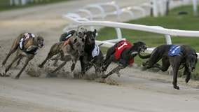 Greyhound racing to end in Daytona Beach in March