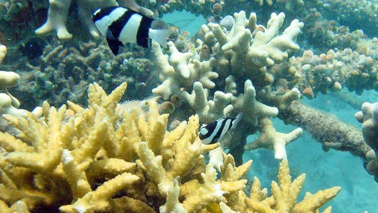 06ad0a04-Bali-Electrified-Coral-Reef_1445397601955-402429.jpg