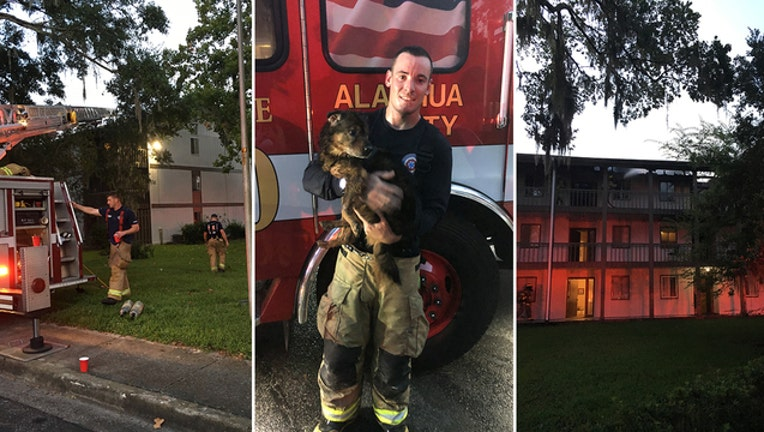 97b4441c-GFD-dog-rescued-fire_1533853422716-402429.jpg