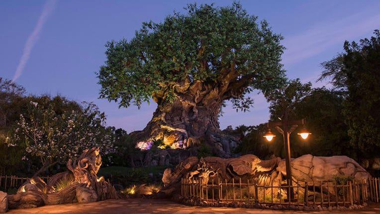 71a5d56c-animal-kingdom-tree-of-life_1454036397847-402429.jpg