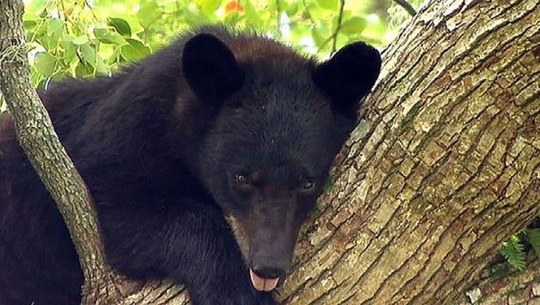 bear-tree-clean-402429.jpg