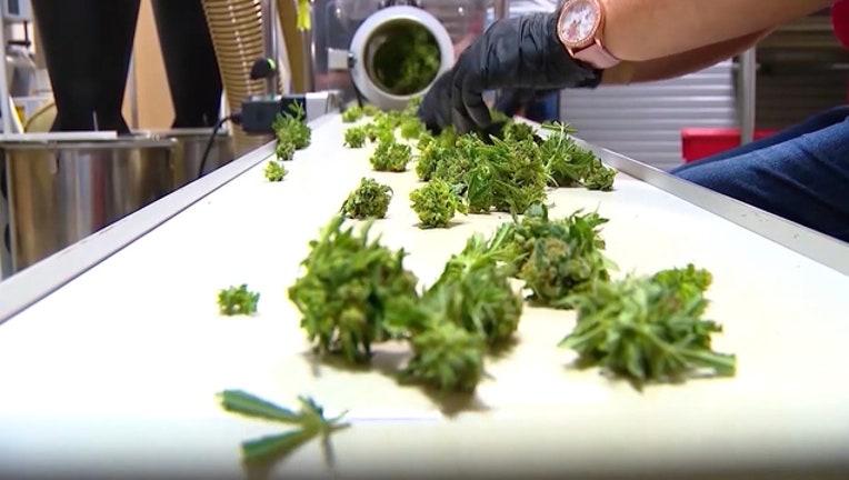 d156a75d-marijuana-pot-cannabis2_1549327473774-402429.jpg