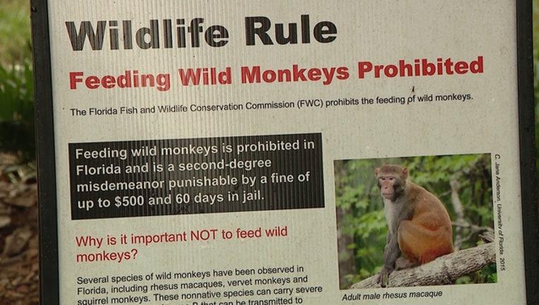0da91484-marion-county-rhesus-macaque-monkey_1542169324265-402429.jpg