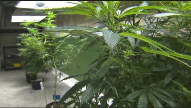 864ed695-medical-marijuana_0005_1478578526249-402429.jpg
