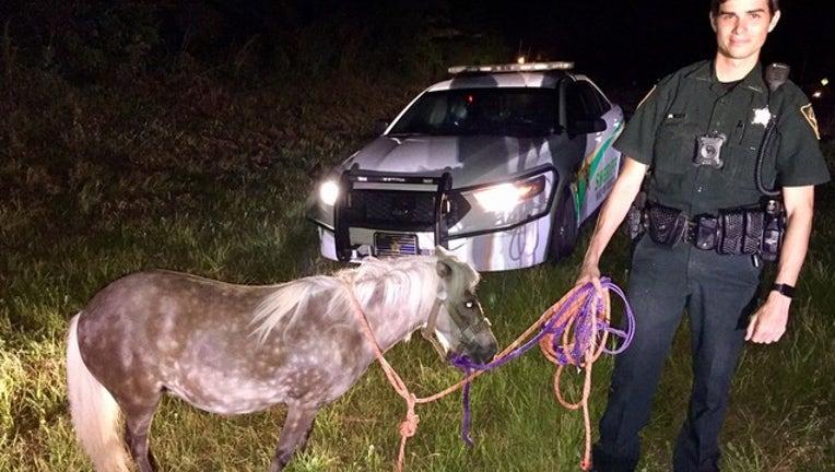 7a7de572-pony rescue_1531841997167.png-402429.jpg