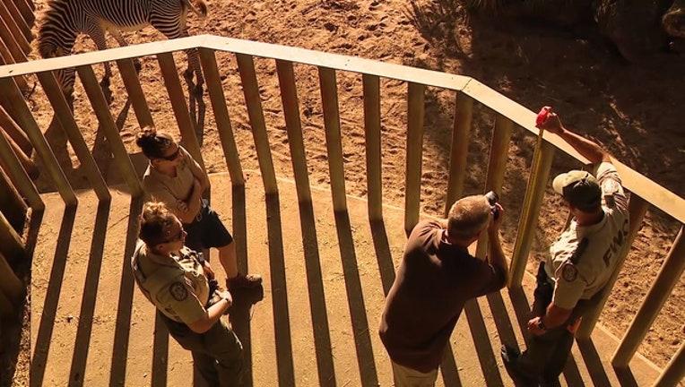 rhino-brevard-zoo_1546475538996-402429.jpg