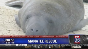 SeaWorld Orlando releases manatee nearly killed after boat strike