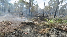 Florida's dry conditions pose wildfire threats