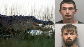 Report: Florida man pours beer in alligator's mouth, encourages it to bite him