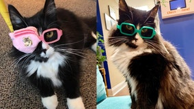 Truffles the cat helps kids get comfortable with wearing glasses, going to eye doctor