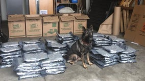 Florida K-9 finds 94 pounds of marijuana during traffic stop