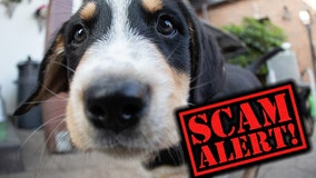 Animal shelter warns of 'lost pet' scam, offers to return missing animal for money