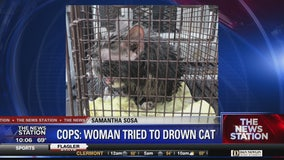 Woman accused of trying to drown cat