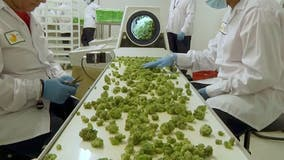 Proposed amendment to legalize recreational marijuana a step closer to 2020 ballot