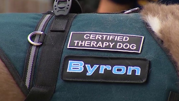 Proposed Florida bill cracks down on misuse of emotional support animal policies