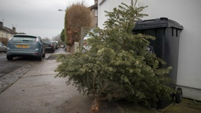 Florida charity will use your Christmas tree to make canes for veterans