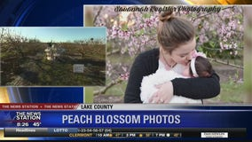 David Does It: Peach Blossom Photos
