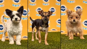 PHOTOS: Here's your complete Puppy Bowl XVI starting lineup