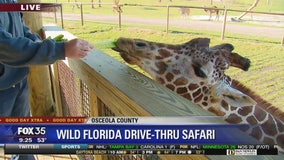 David Does It: Wild Florida drive-thru safari