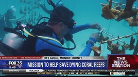 Scientists in Florida Keys spending millions to stop coral reef deaths