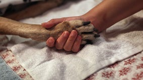 Florida gets federal aid to fight animal diseases