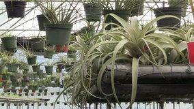 Bundle up! Here's what to do with your plants during cold weather