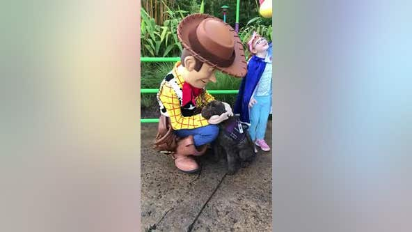 Service dog gets all the love from Woody and Bo Peep at Disney's Hollywood Studios