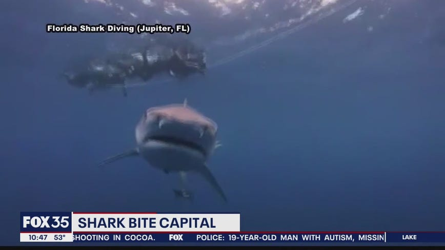 Florida is the shark bite capital of the United States