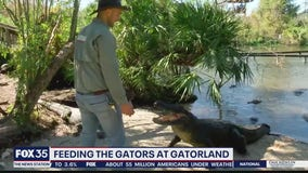 Behind the scenes at Gatorland