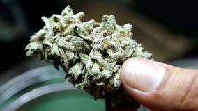 Florida House eyes THC limit for medical marijuana