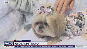 David Does It: Global Pet Expo