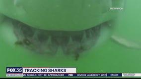Tracking sharks off Florida coast