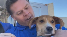 FOX 35 anchor adopts shelter dog after bonding during 'Fur Bowl' segment